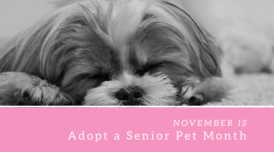 ADOPT A SENIOR PET MONTH – November