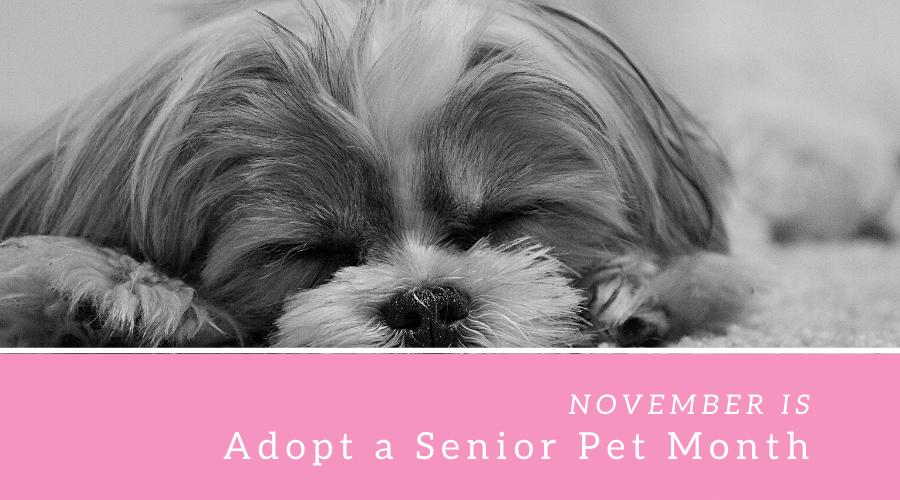 ADOPT A SENIOR PET MONTH – November