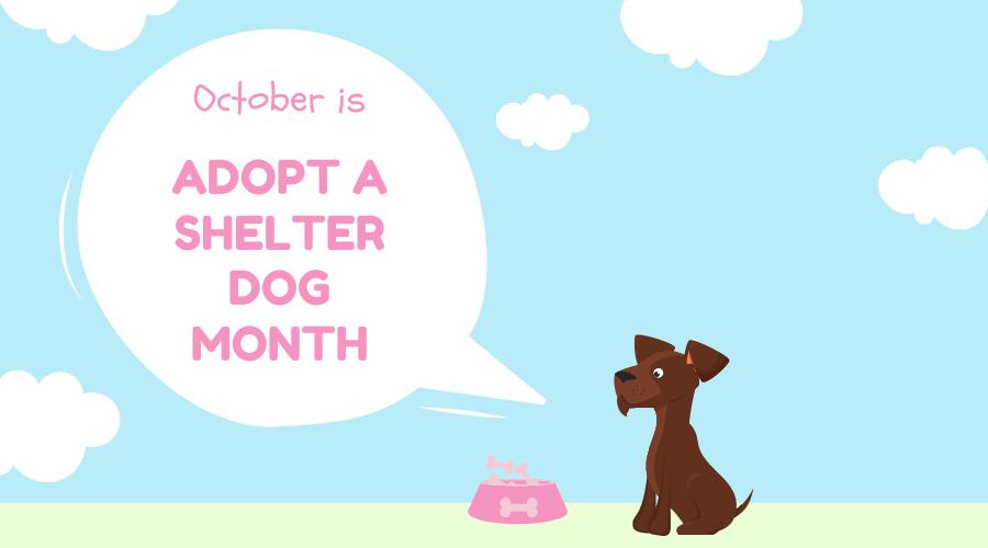 ADOPT A SHELTER DOG MONTH – October